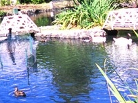 Pilling's Pond