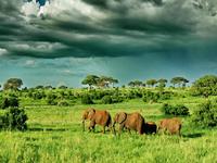 7 Day Lodge Safari Arusha Tarangire Manyara Serengeti Ngorongoro