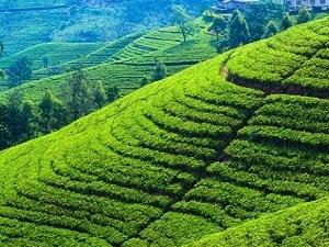 Amazing Tour in Sri Lanka Photos