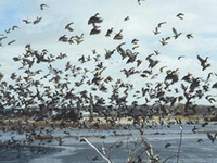 Ten Mile Creek State Fish & Wildlife Area