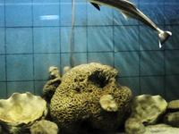 The Marine Aquarium and Research Centre (MARC)