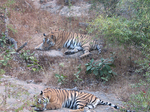 Bandhavgarh National Park Holiday Package Photos