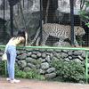Tourist Attractions In Avilon Zoo