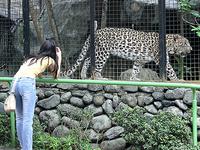 Avilon Zoo