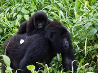 Parque Nacional de Virunga