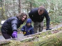Trail of the Cedars Nature Walk