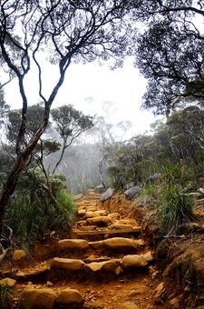 Trail Up Mount Kinabalu