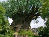 The Tree Of Life, The Icon Of Disney's Animal Kingdom