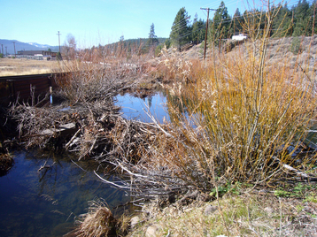 Trout Creek (Truckee River)