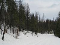 Trout Lake Trail
