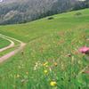 Tux Theme Trail Tyrol Austria