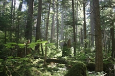 The Tongass National Forest