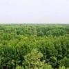 U Minh Forest