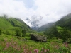 Another View Of Valley Of Flowers National Park