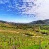 Valley Of Munster - Alsace
