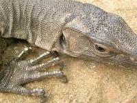 Sukla Phanta Wildlife Reserve