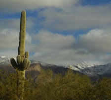 View Of Coronado National Forest
