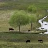 Shey Phoksundo National Park