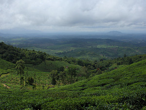 Wayanad Holiday Package Photos