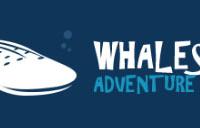 Whaleshark Adventure & Tours