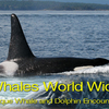 Whales World Wide