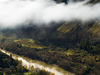 Whanganui Forests Hunting Area