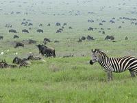 Tanzania Safari Circuito Norte 7 días