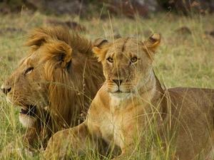 Go Places Maasai Mara Experience Photos
