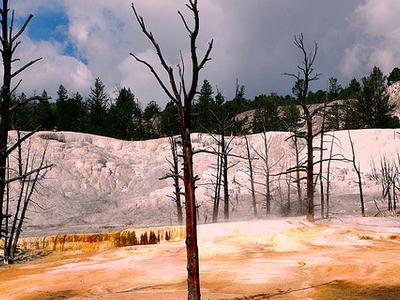 Yellowstone Plateau - Wyoming - USA