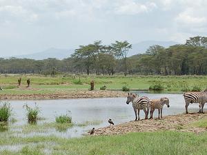 2 Days Magical Lake Nakuru Photos
