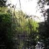 Bosque Atlántico