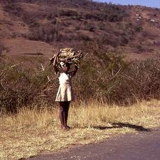 Zulu Girl Carrying Firewood - South Africa