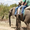 14 Day Full South Africa Tour
