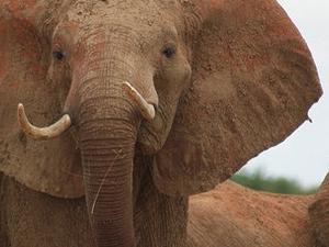 3 days Kenya Amboseli National Park Photos