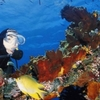 Best of Bali Dive Safari 2014 - 13Days 12 Nights 27Dives
