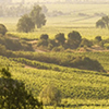 Casablanca Valley and Wine Tour, Tour in Private