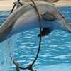 Dolphines Show
