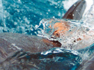 Dolphin Show in hurghada Photos