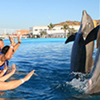 Dolphins Swim in Cabo San Lucas
