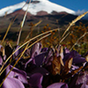 Excursion to the Cotopaxi National Park