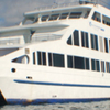 Galapagos Island by Cruises