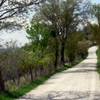L'anello del Monte (Walking Daily Tour and visit of the ancient village of Monte Santa Maria Tiberina)