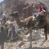 Ras Abu Galum camel Safari