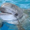 Troy Dolphin Show