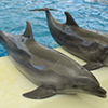 Troy Waterpark & Dolphin Show