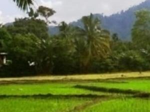 Bukit Lawang, Sumatra, friendly hos