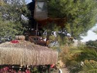 enchanted treehouse turkey