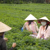 Mai Thanh Van-happy-friendly