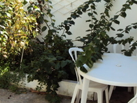 Want to wake up with the birds?