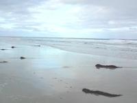 Anglesea Backpackers